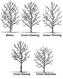 tree and shrub pruning Charlottesville