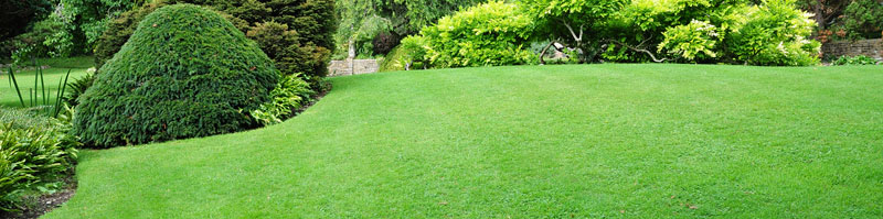 Turf Care Beautiful Lawn